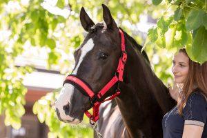 Das weich gepolsterte Nylon-Halfter Supreme mit hohem Wohlfühl-Faktor ist gleichzeitig aber auch sehr robust – ideal also für junge Pferde.