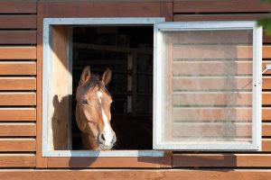 Eine Box mit Außenfenster ist bestens als Frischluftspender und zum Sonne tanken geeignet