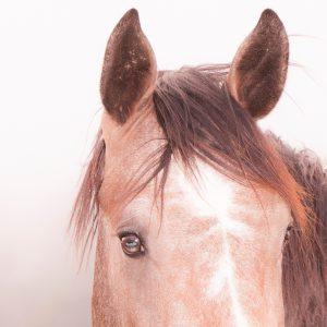 """Die """"monoklare Sichtweise"""" erklärt viele Verhaltensmuster Deines Pferdes"""